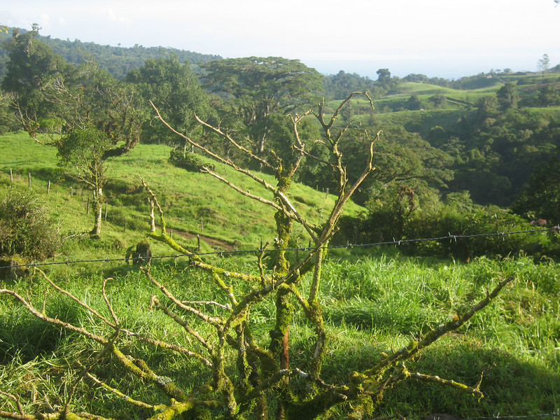 Costa Rica 08(2) 011.jpg
