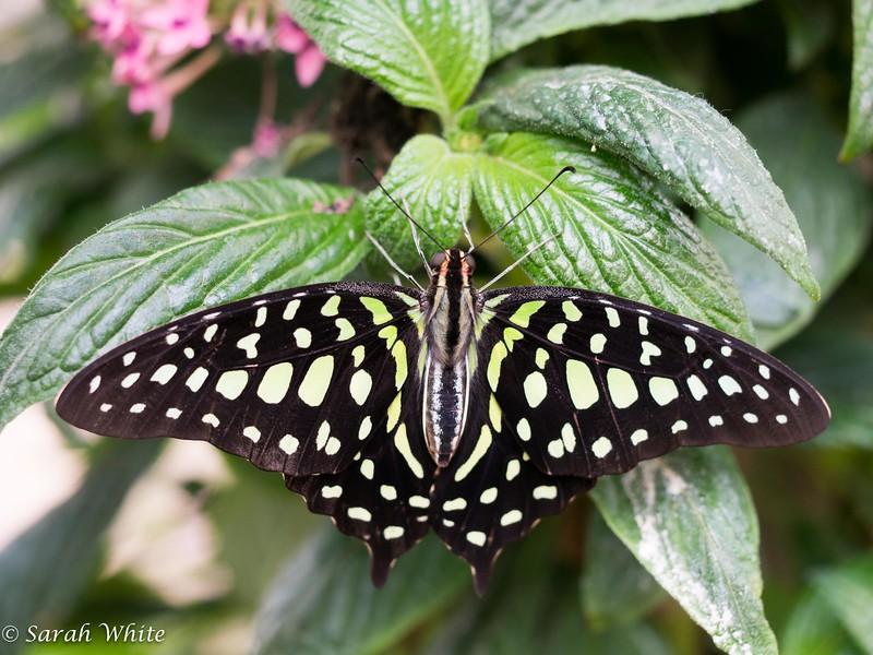 140503_ButterflyHouse_275.jpg