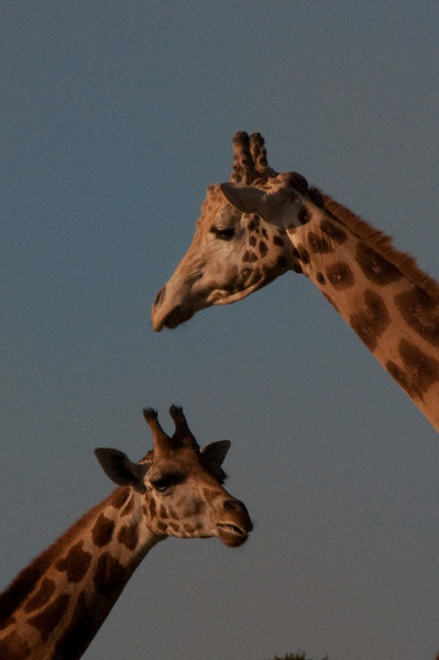 african safari Park-Canada-1.jpg