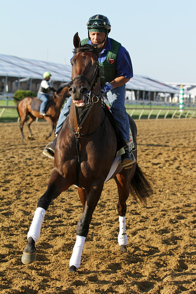 Itsmyluckyday (Lawyer Ron) trains for the Preakness Stakes (Gr I) at Pimlico 5/17/13. Trainer: Edward Plesa. Owner: Trilogy Stable & Laurie Plesa