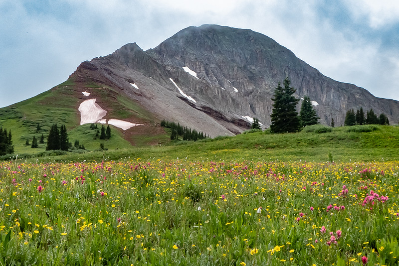 Engineer Mountain and Wildflowers