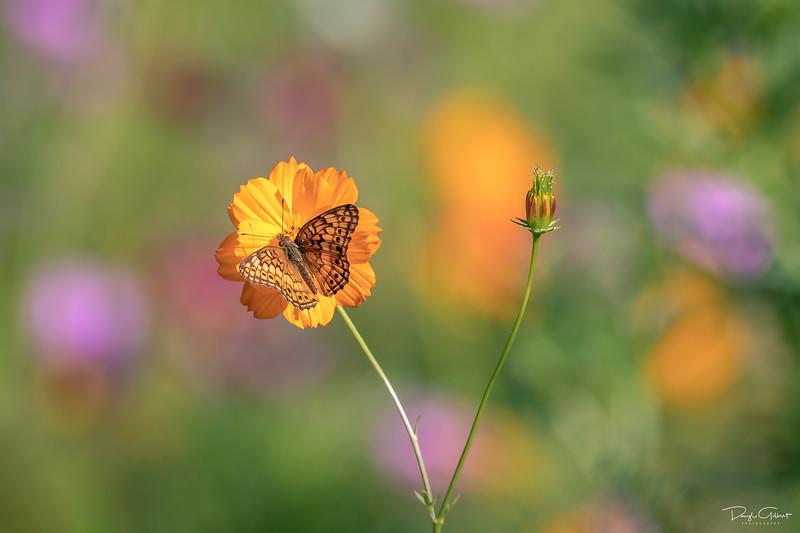 """""""Butterfly Palette"""""""
