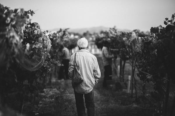 8-18-2020 | Mesilla Valley Estates - Rio Grande Winery