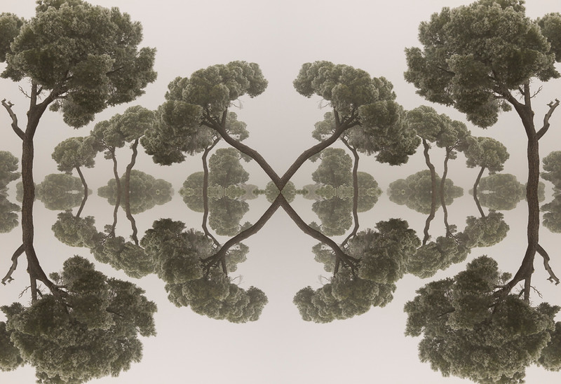 FAN11-Lake of Arboreal Swans