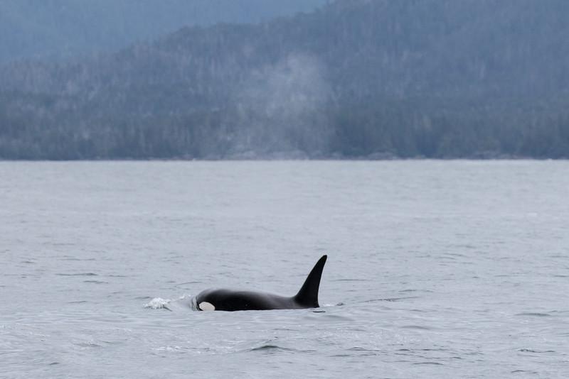 Alaska 2015 - Sitka -  072515-215.jpg
