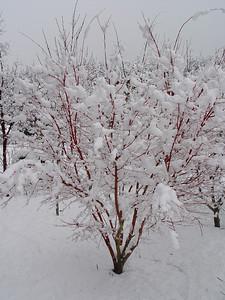 2008 - Snow & Ice