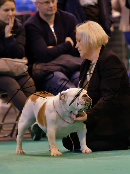 Crufts Bitch 340-621