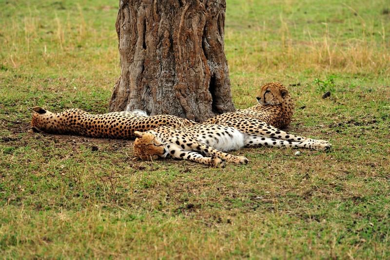 Africa 2010-161.JPG