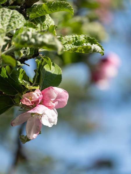 Nana's garden 24 Apr 2020-4.jpg