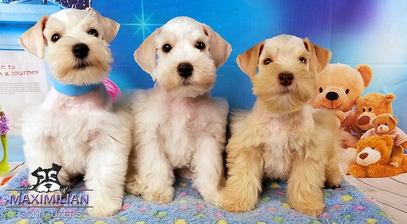 Jasmine Pups 012.jpg