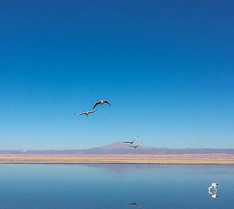 05 Flamingotur Chile