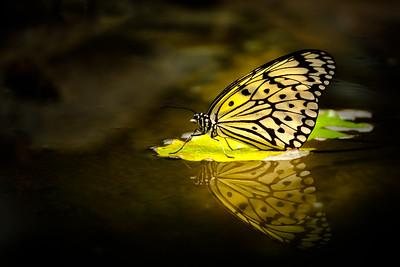 Seattle Butterfly House November 2019