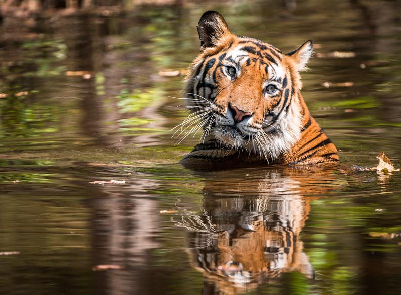 India_April_2019-1093.jpg