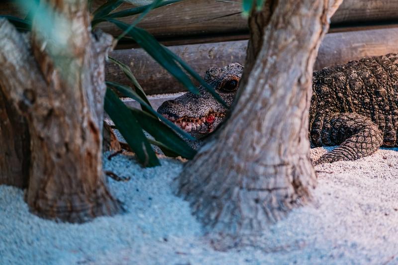 Tonis Zoo-0571.jpg