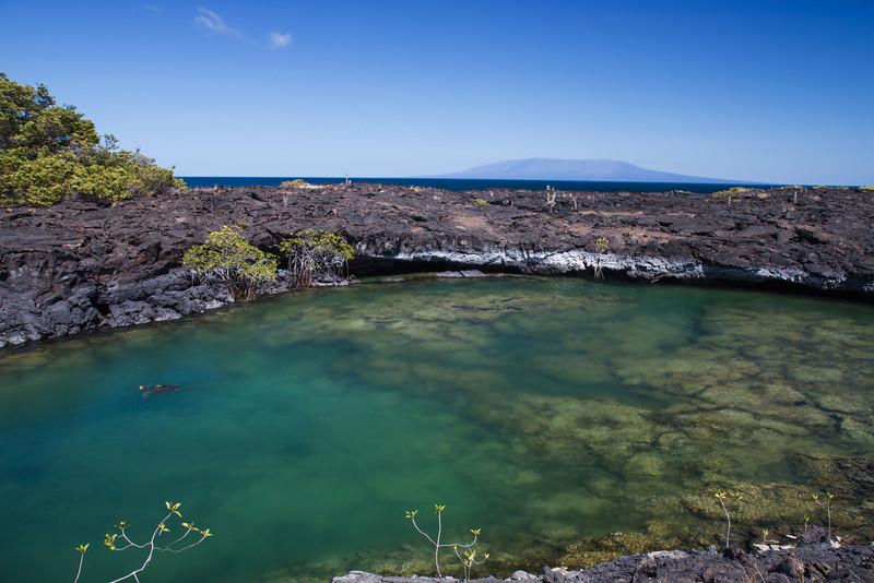 Tidal Pond at Punta Moreno, Galapagos, Ecuador (11-23-2011) - 692.jpg