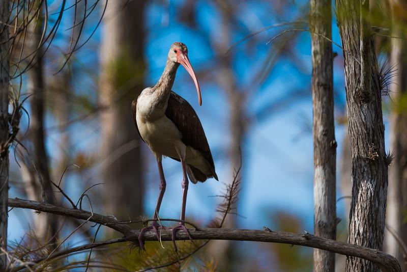 Everglades (16 of 60).jpg