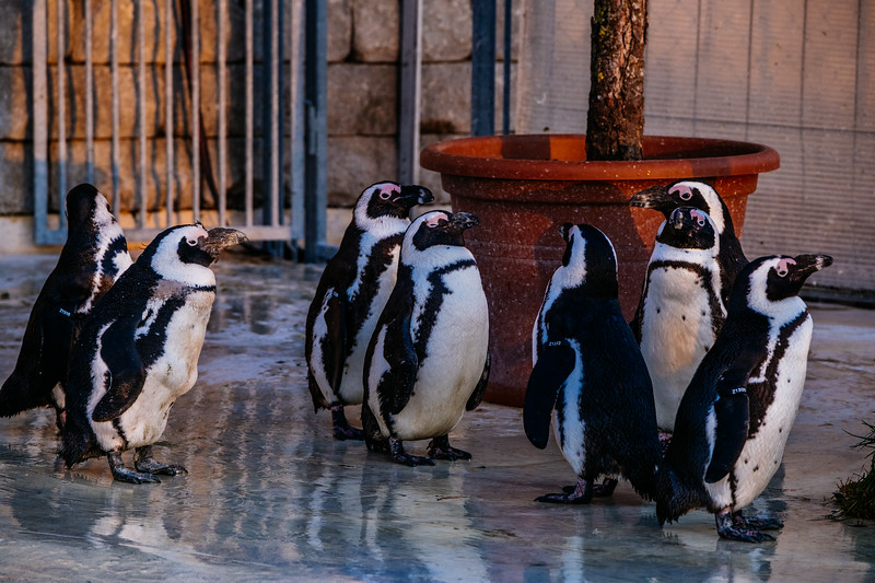 Tonis Zoo-0504.jpg