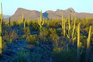 Phoenix Arizona   Jan 09