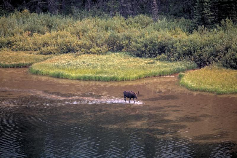 Murder Moose