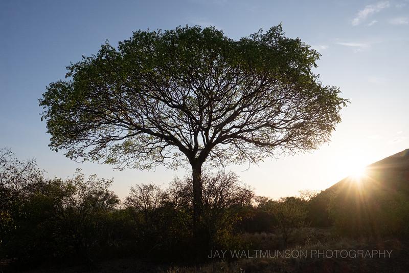 Jay Waltmunson Photography - Kenya 2019 - 189 - (DXT19621).jpg