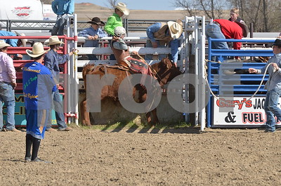 Steers Saddle 05-03-15