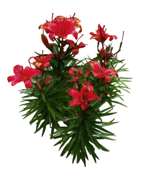 red_lilies_png___by_alz_stock_and_art-d7ogs6p.png