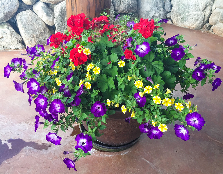 Purple, yellow and red flowers in a pot. Ask the housesitter to water them while you're on an extended vacation.