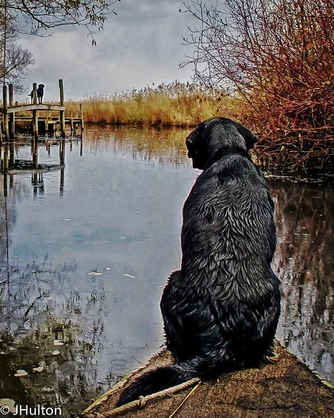 dogs-2-Edit-Edit.jpg