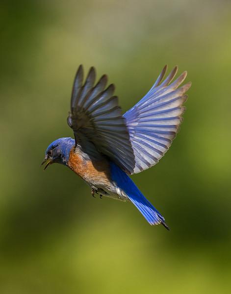 Robin-41.jpg