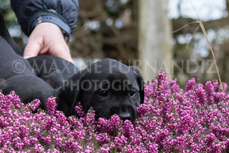 Weika Puppies 24 March 2019-6404.jpg