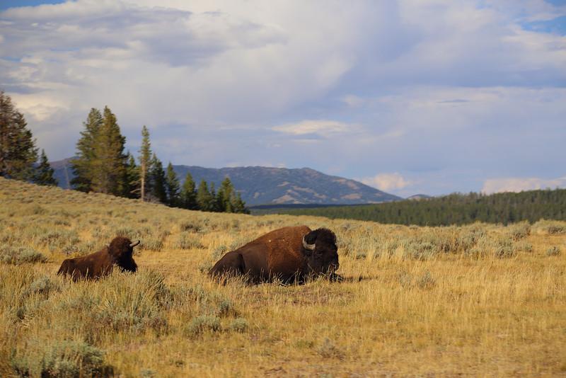 Yellowstone 082.JPG