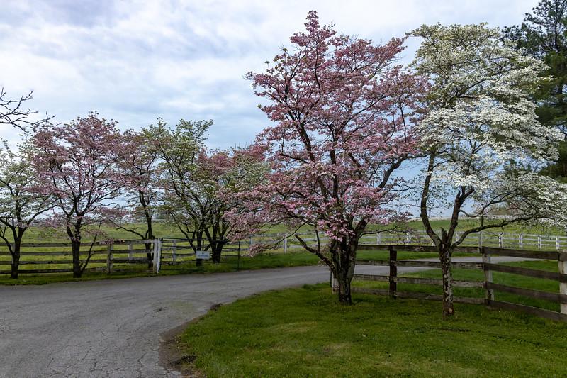 Manchester Horse Farm Lexington KY  April 25, 2019   021.jpg