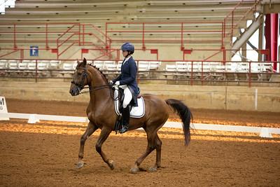 Horse 462