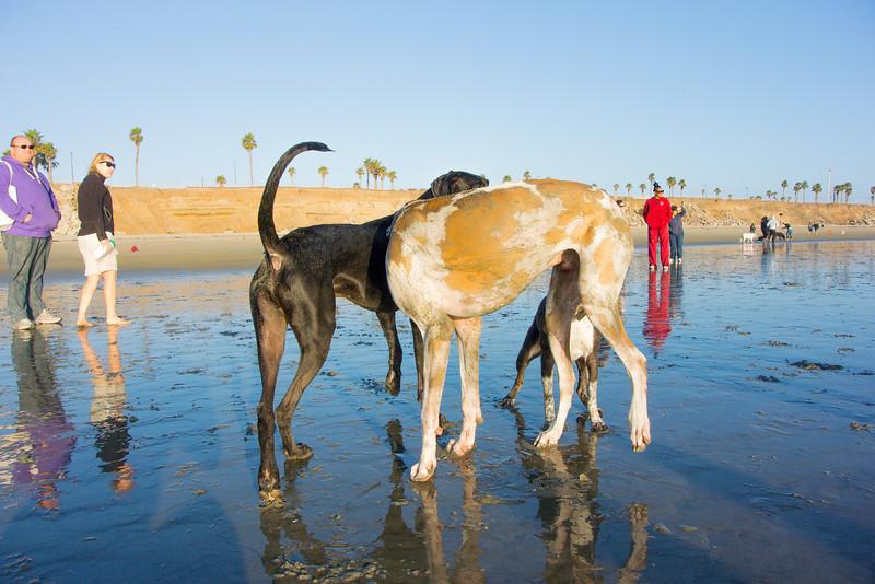 dogs_beach-64.jpg