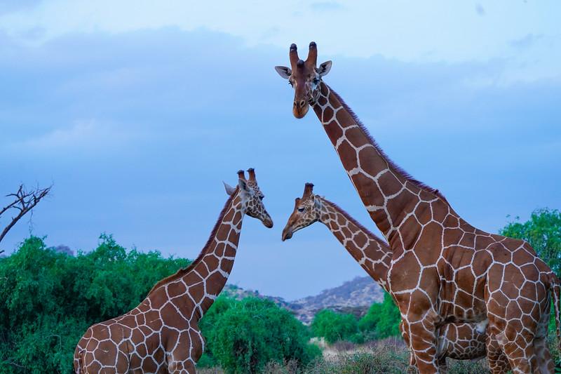 safari-2018-13.jpg
