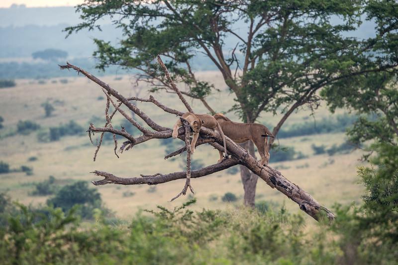 Uganda_T_QE-106.jpg
