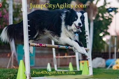 www.JumpCityAgility.com Dog Agility