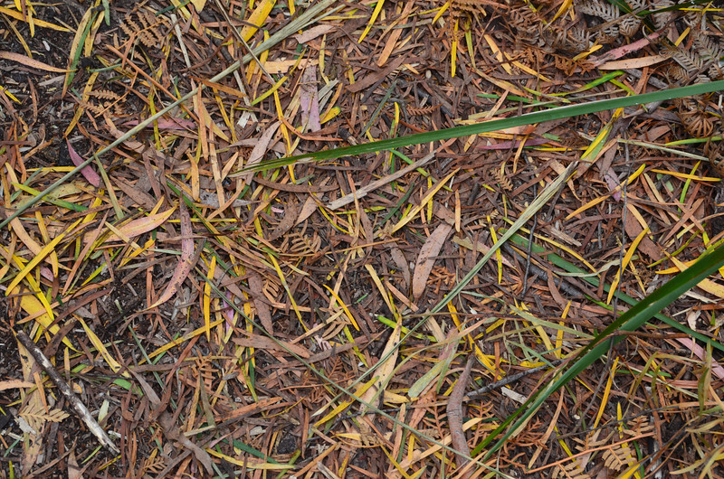 the forest floor, en route to...
