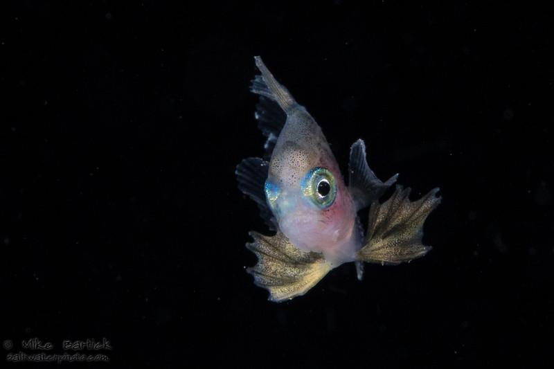 Driftfish (1 of 1).jpg