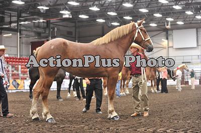 2011 Draft Horse Futurity