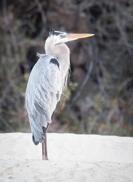 Galapagos_MG_4785.jpg