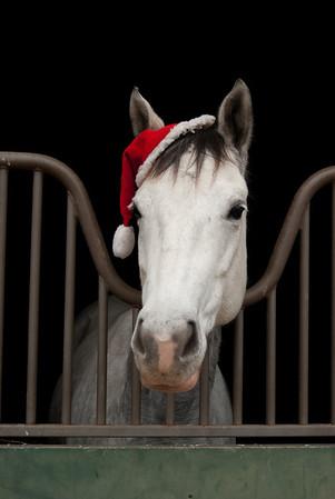 Westphalian Farm Christmas Pics Nov 2009