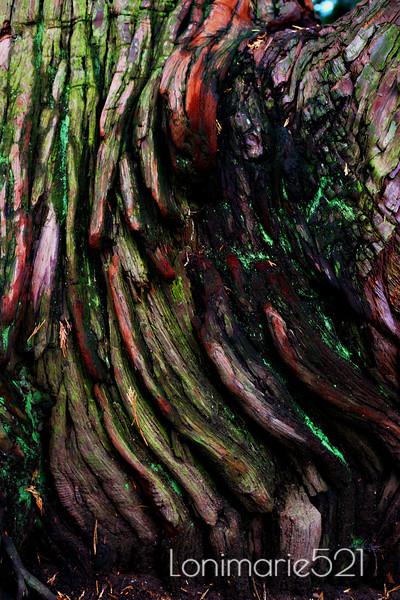 Tree feathers1.jpg