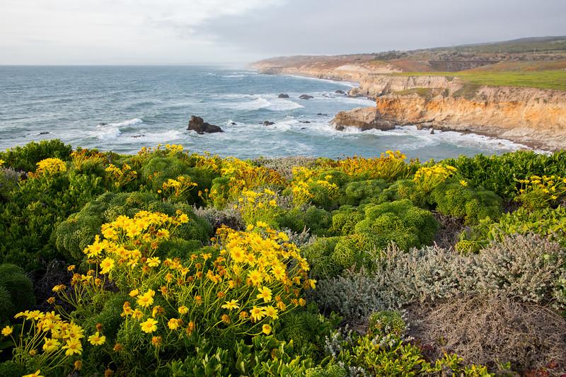 WVWS_California Coast-3126.jpg
