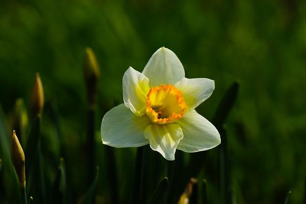 Blommor maj