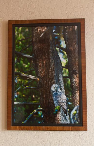 framedgreatgray.jpg