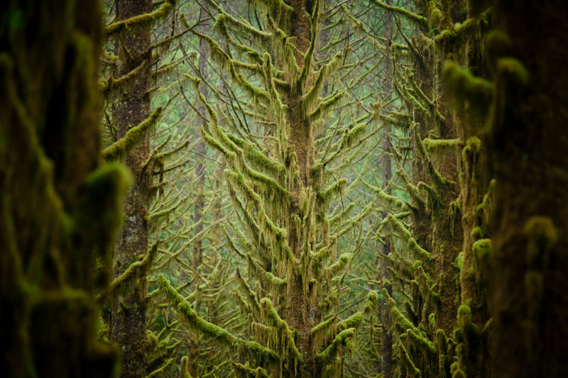 The Cascadia Project
