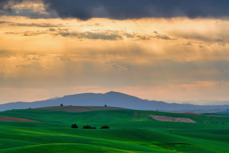 Morning Light Palouse