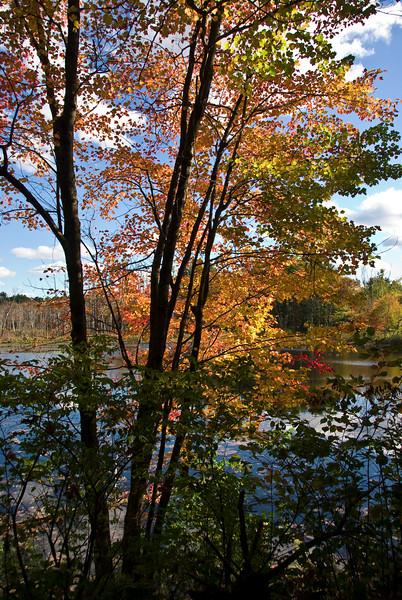 Colors at edge of Nashua River   (Oct 13, 2007, 01:54pm)
