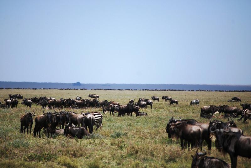 Serengeti (54).JPG